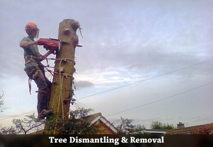 Tree Dismantling and Removal